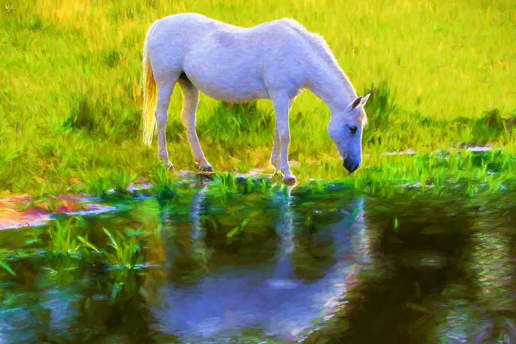 White Horse green grass at waterside, Art Canvas Print