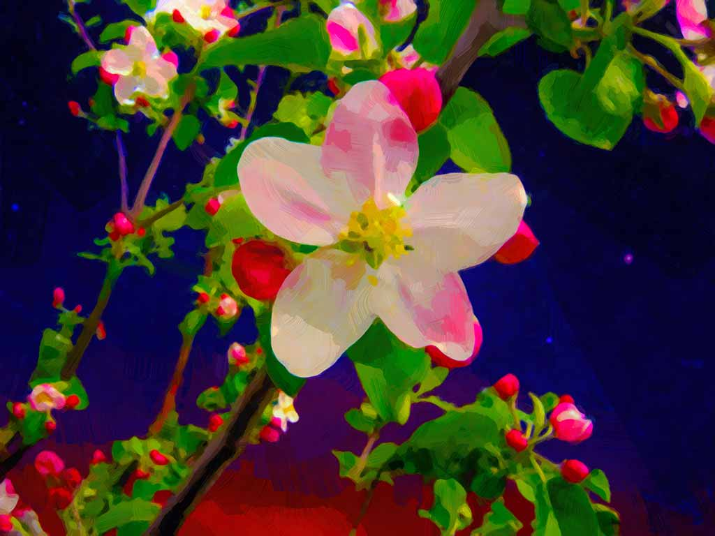 Apple Blossom against blue starry sky in digital painting on Art Canvas Print by Wieslaw Sadurski