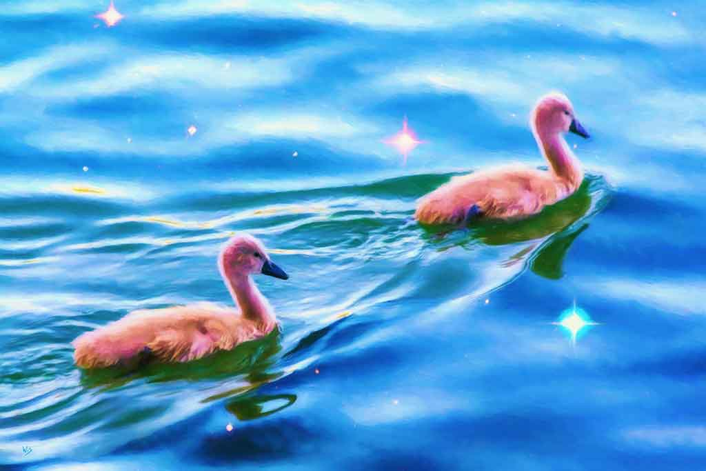 Two swan children swim Starry Waters; painting by Wiesław Sadurski