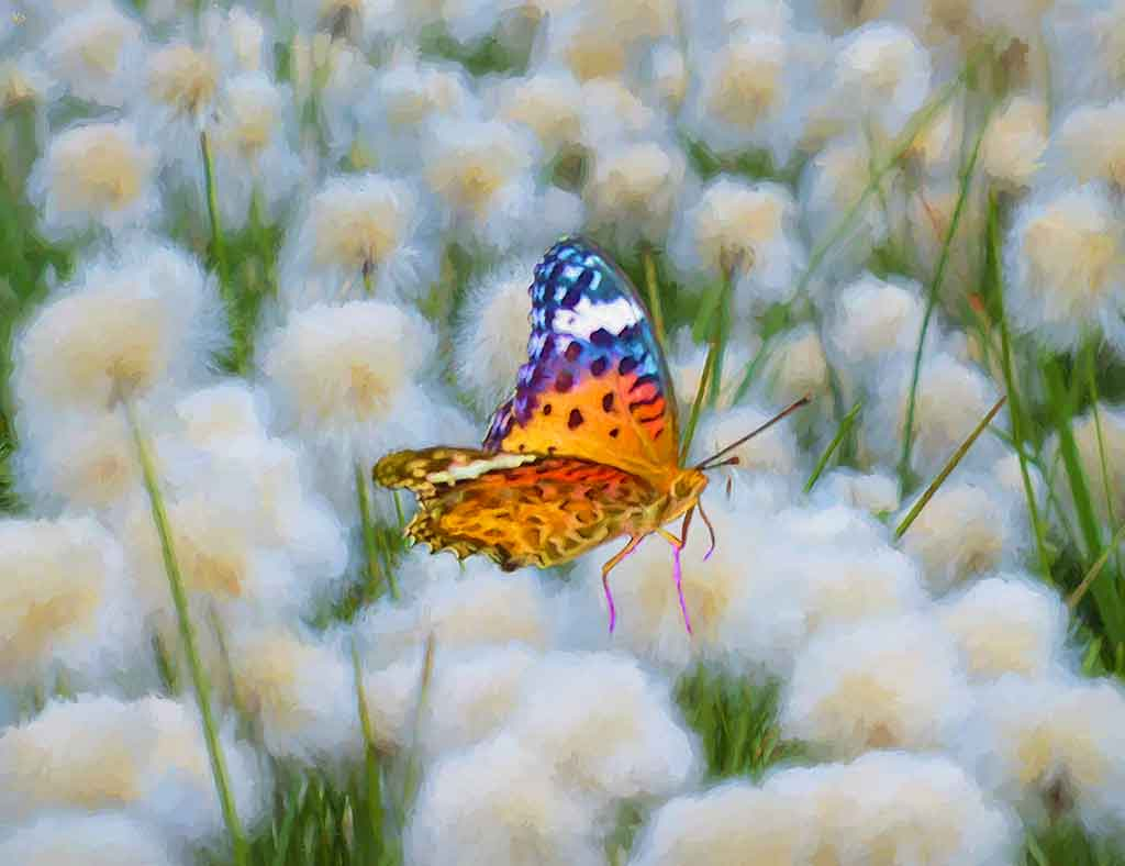 Butterfly on cottongrass - summer digital oil painting and Art Canvas Print by Wieslaw Sadurski