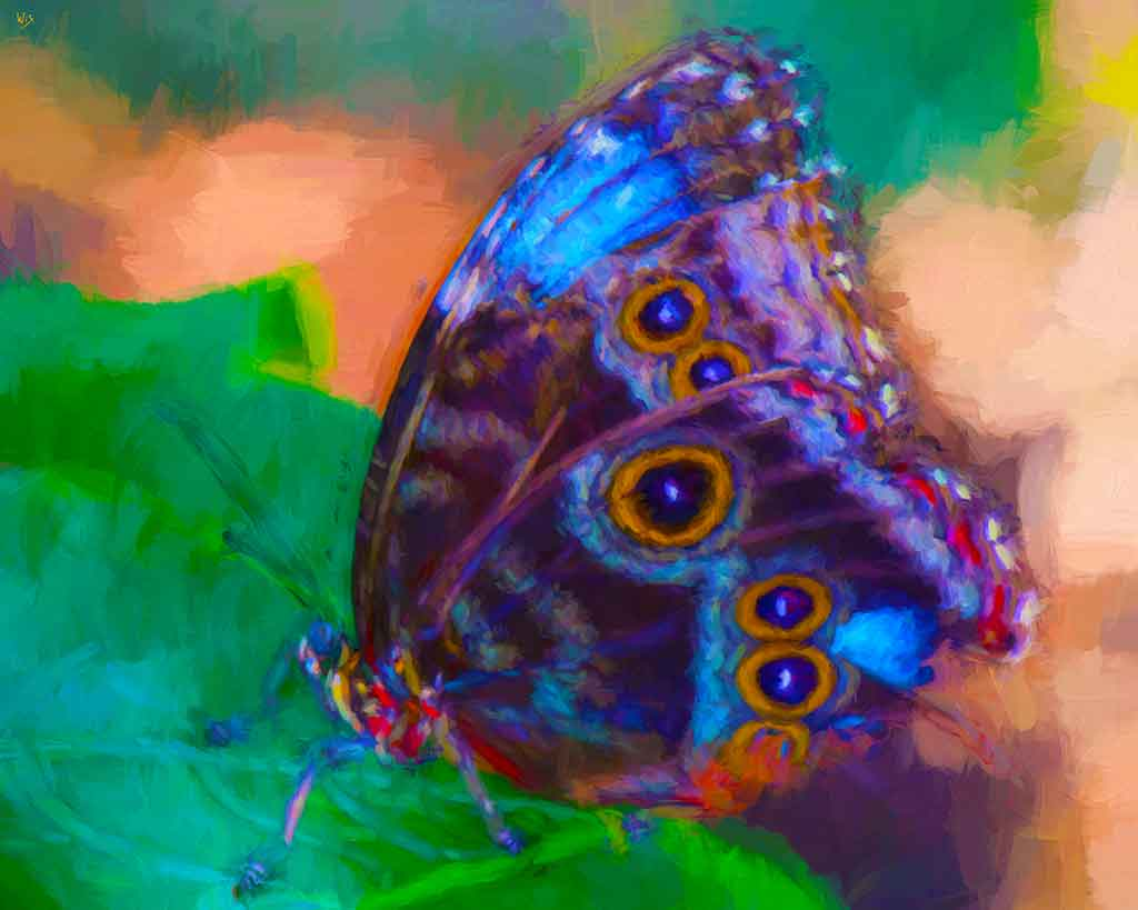 Colorful Butterfly on Leaf, digital oil painting and Art Canvas Print by Wieslaw Sadurski