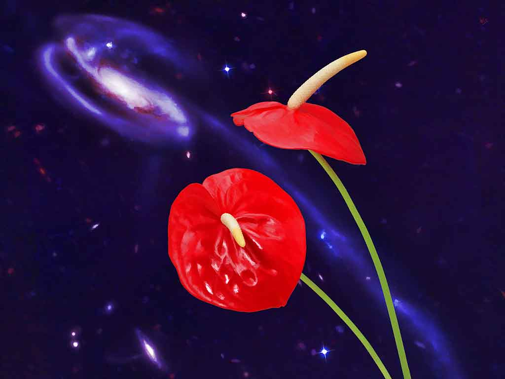 Cosmic Flamingo Flowers and starry night in digital painting on Art Canvas Print by Wieslaw Sadurski