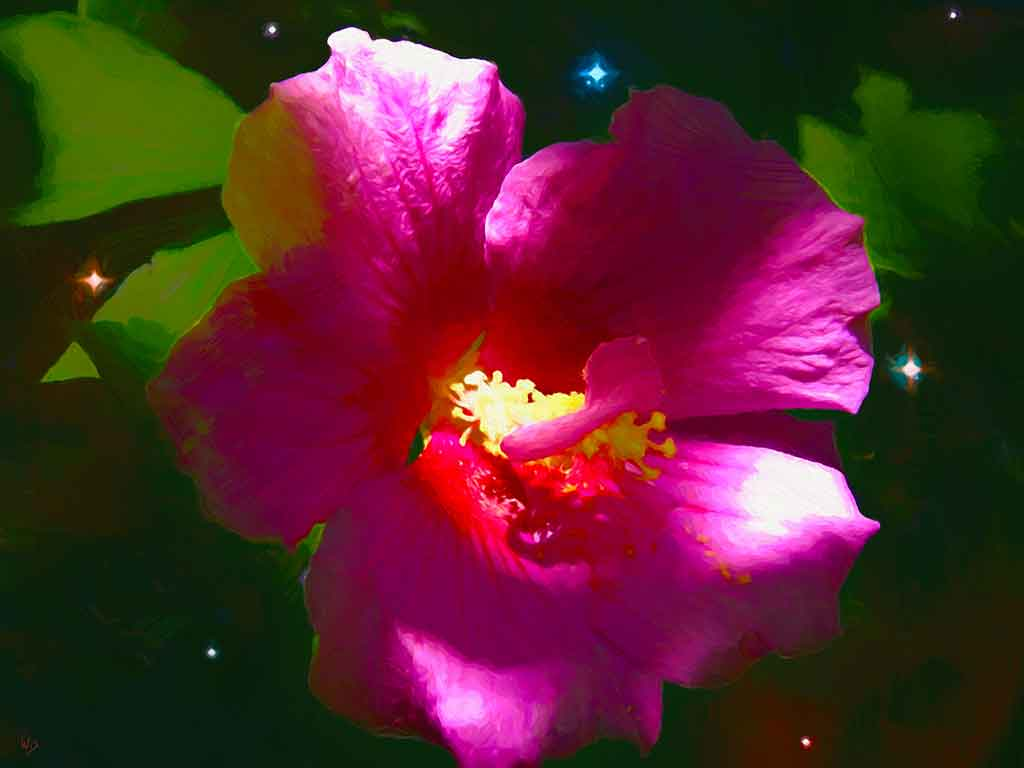 Blossoming Hibiscus Flower on starry sky background in a digital oil painting by Wieslaw Sadurski