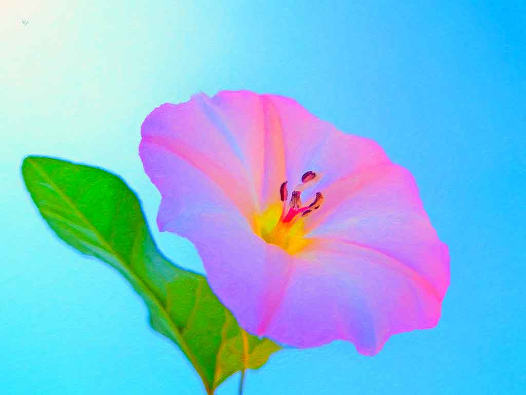 Morning Glory Flower against blue sky, digital Oil Painting on Art Canvas Print by Wieslaw Sadurski