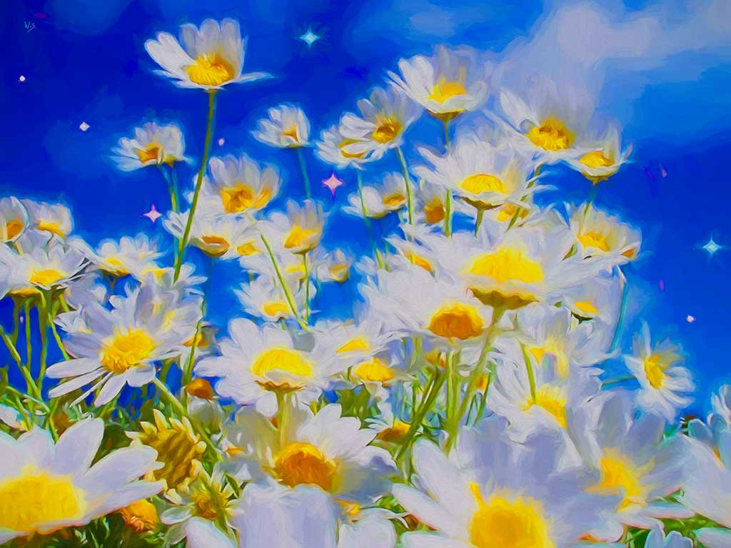 Daisy Flowers landscape, digital Oil Painting on Art Canvas Print by Wieslaw Sadurski