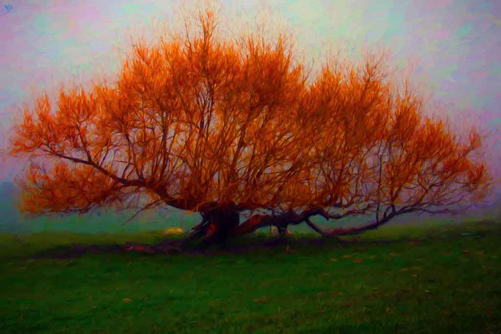 Great tree in Fall, Art Canvas Print