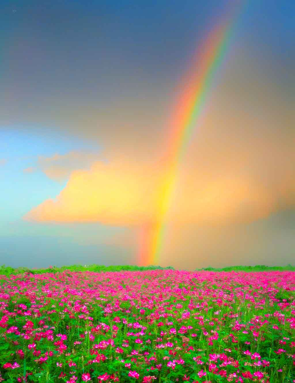 Flowerfield Rainbow, digital landscape painting on Art Canvas Print by Wieslaw Sadurski