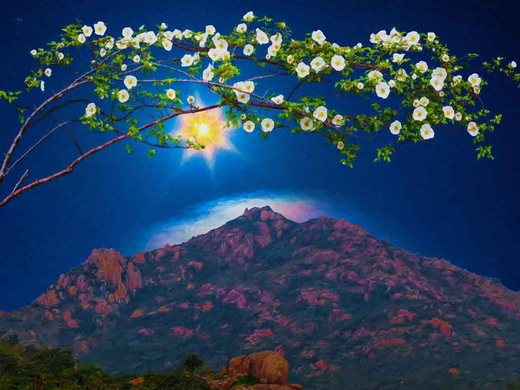 Blossoming Twig above Arunachala in landscape, digital oil painting on Art Canvas Print by Wieslaw Sadurski