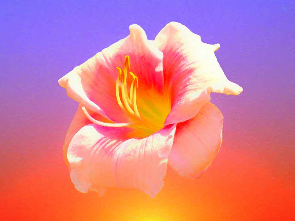 Lily Flower in the Sky, digital painting on Art Canvas Print by Wieslaw Sadurski