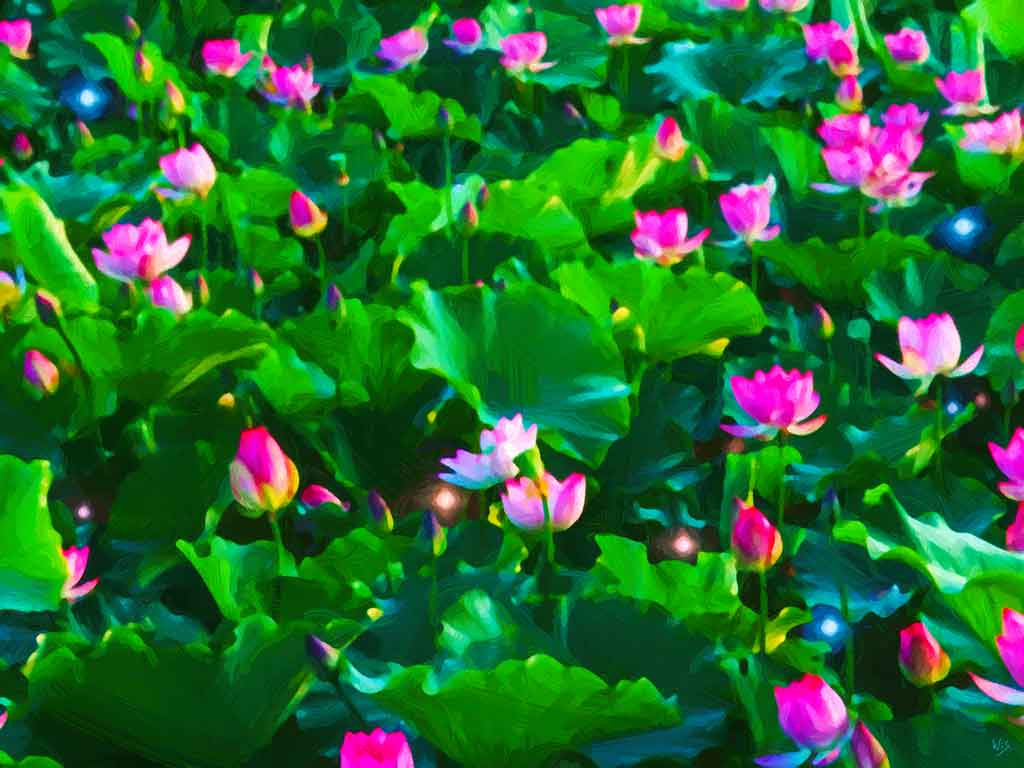 Lotus flowers blossom in paintings and art canvas prints created by lotus flower field mightylinksfo