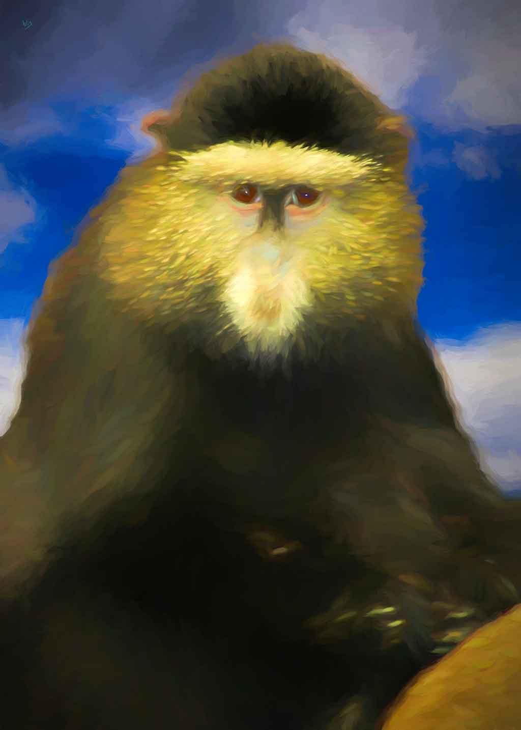 Monkey Portraits in Paintings