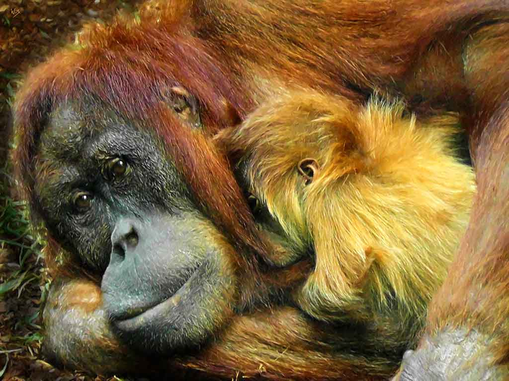 Orangutan with a Child, digital portrait painting on Art Canvas Print by Wieslaw Sadurski
