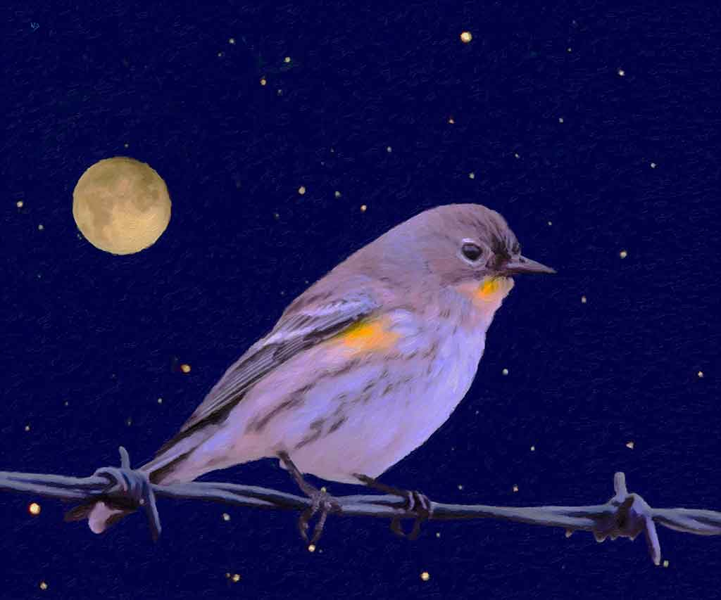 Bird on Wire with starry sky in the background, digital painting and Art Canvas Print by Wieslaw Sadurski