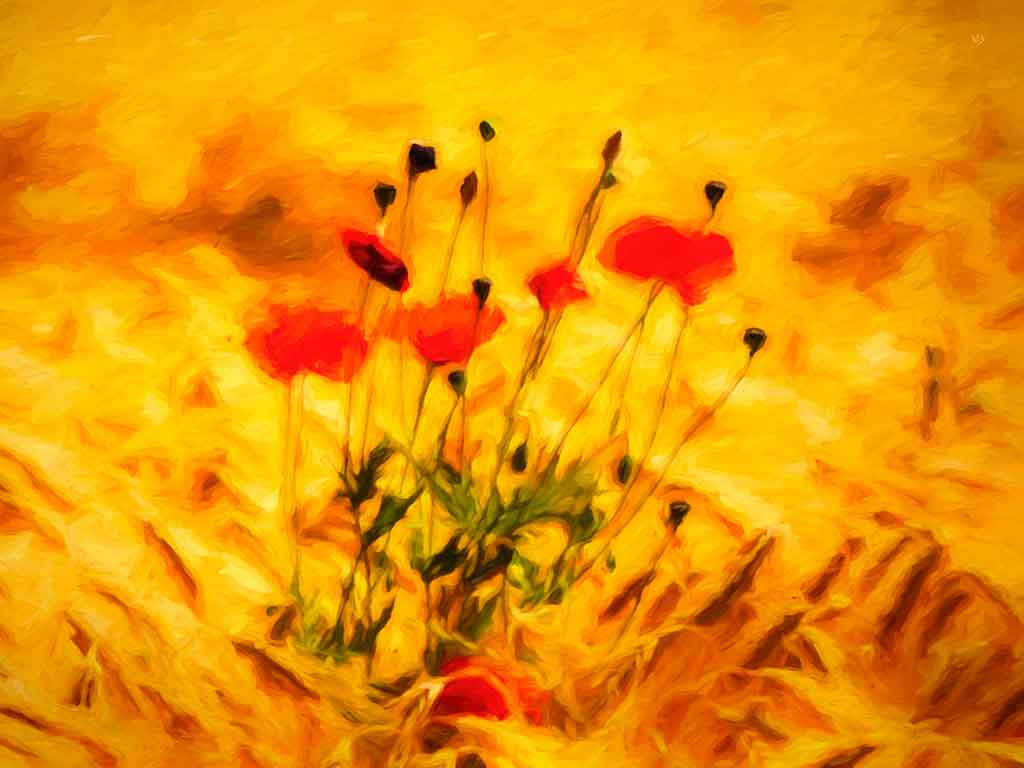 Summer Poppy Field, digital oil painting and art canvas print by Wieslaw Sadurski