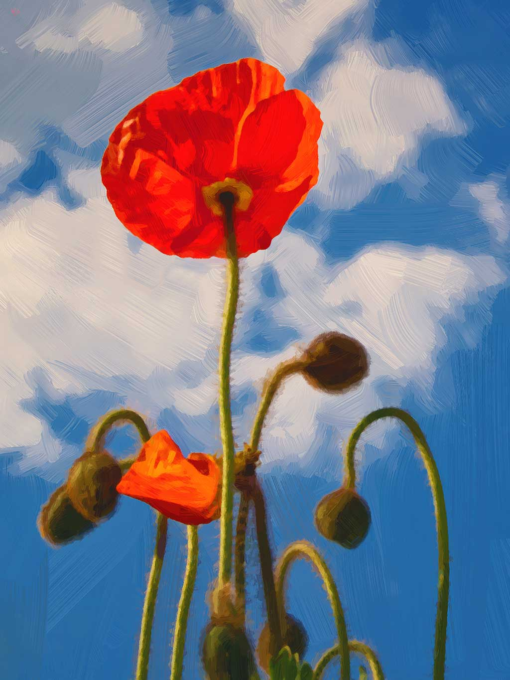 Red Poppy on Blue Sky, digital oil painting and art canvas print by Wieslaw Sadurski