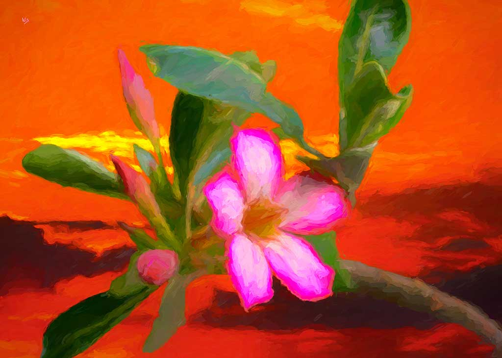 Desert Rose in landscape, digital oil painting and art canvas print by Wieslaw Sadurski