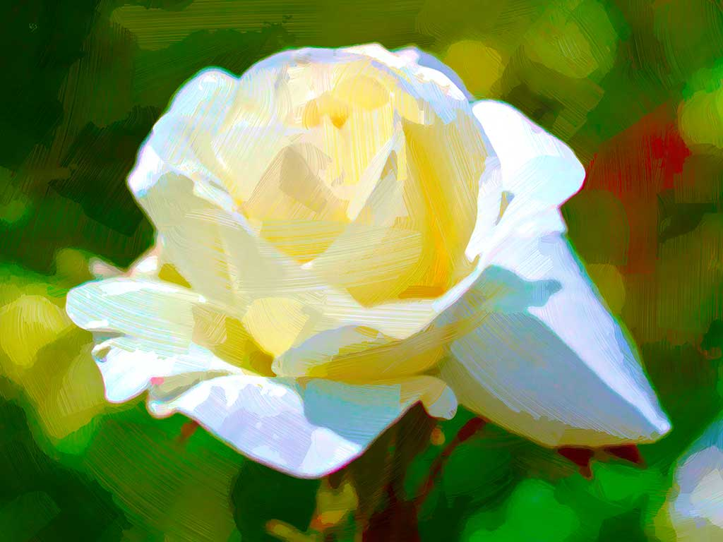 White Rose Laughing painting - a single rose on the green in a digital oil painting by Wieslaw Sadurski