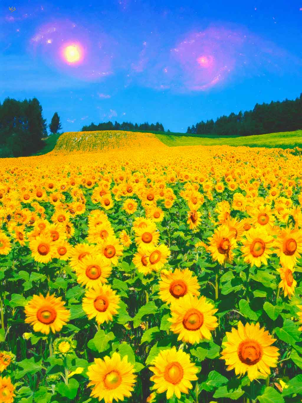 Sunflower Field Galaxies, digital painting on Art Canvas Print by Wieslaw Sadurski