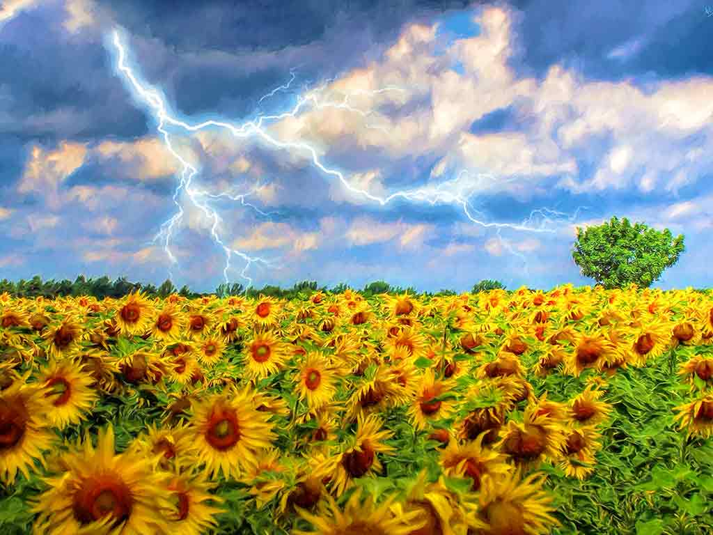 Storm over Sunflower Field in a digital oil painting on Art Canvas Print by Wieslaw Sadurski