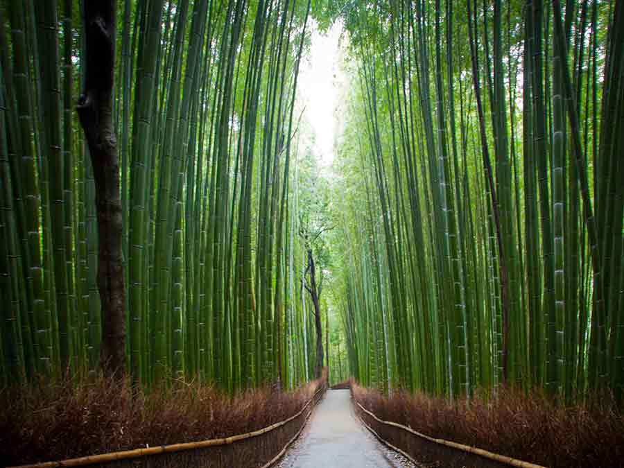 Bamboo Forest in Kyoto walking path, photo by Wieslaw Sadurski