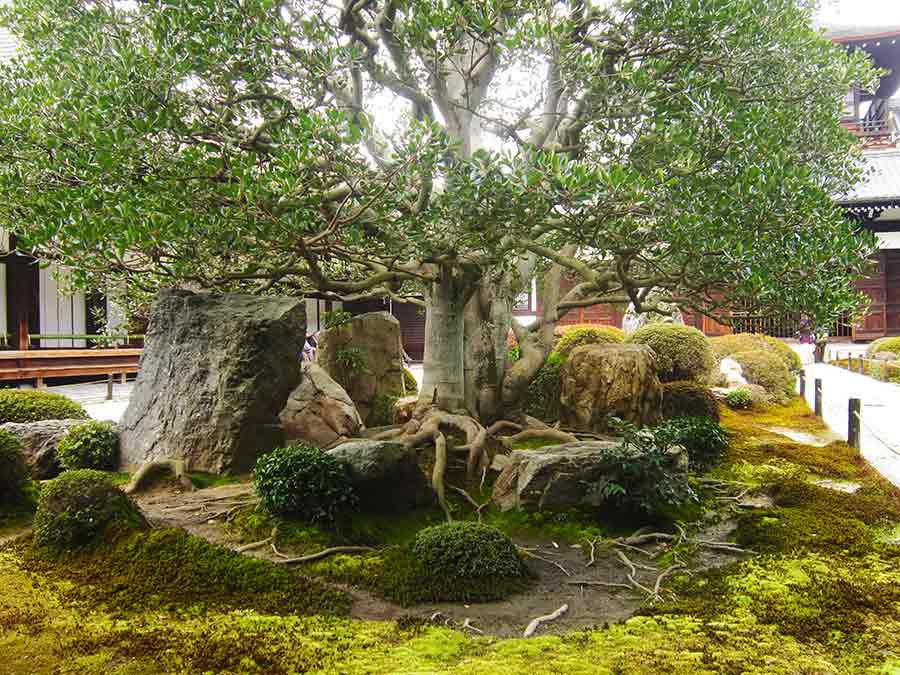 Tree Roots Stones in Tofukuji Zen Garden Kyoto, photo by Wieslaw Sadurski